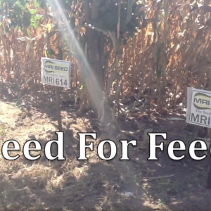 seed-for-feed